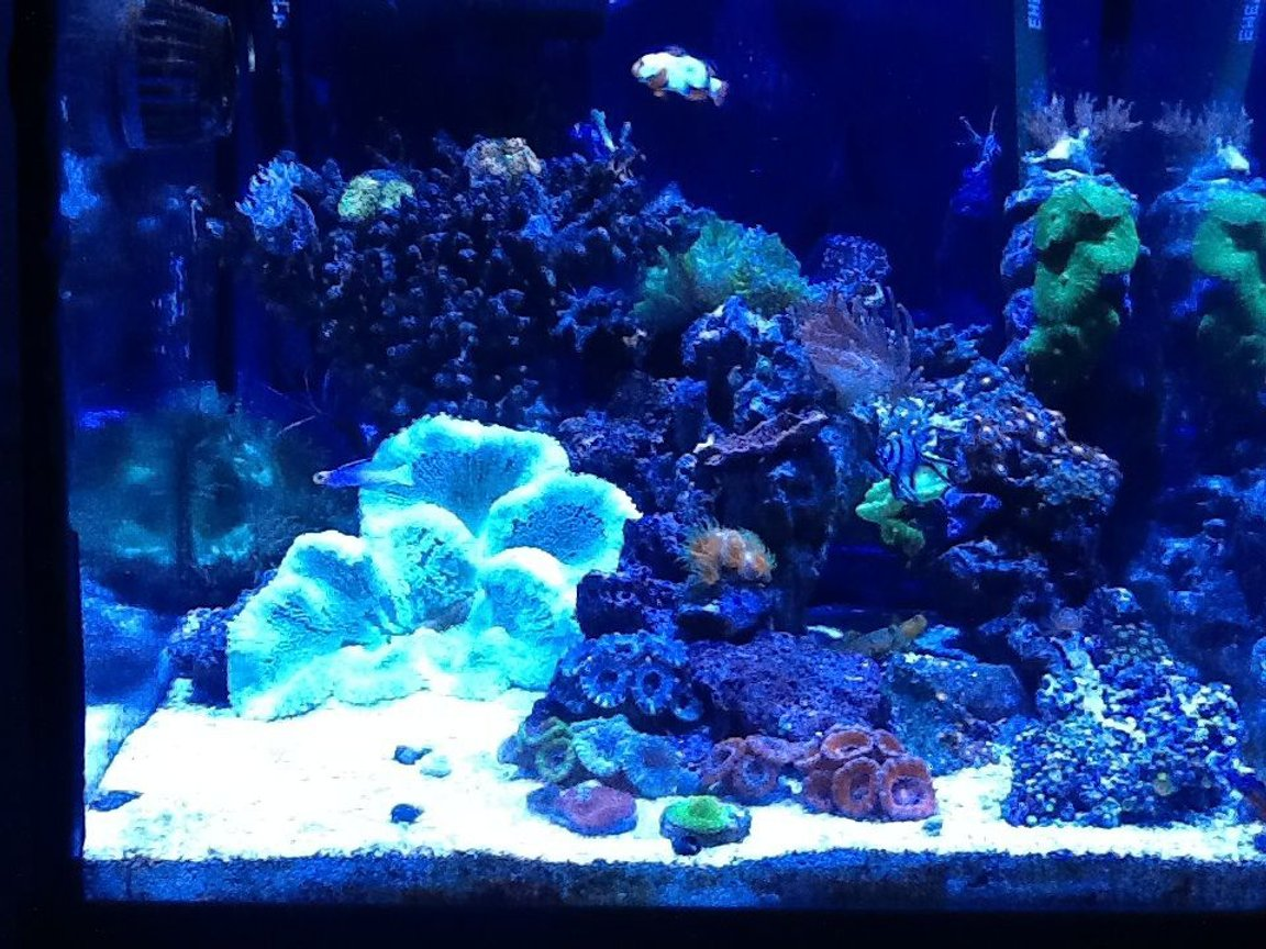 corals inverts stocking in 30 gallons tank - My 30g