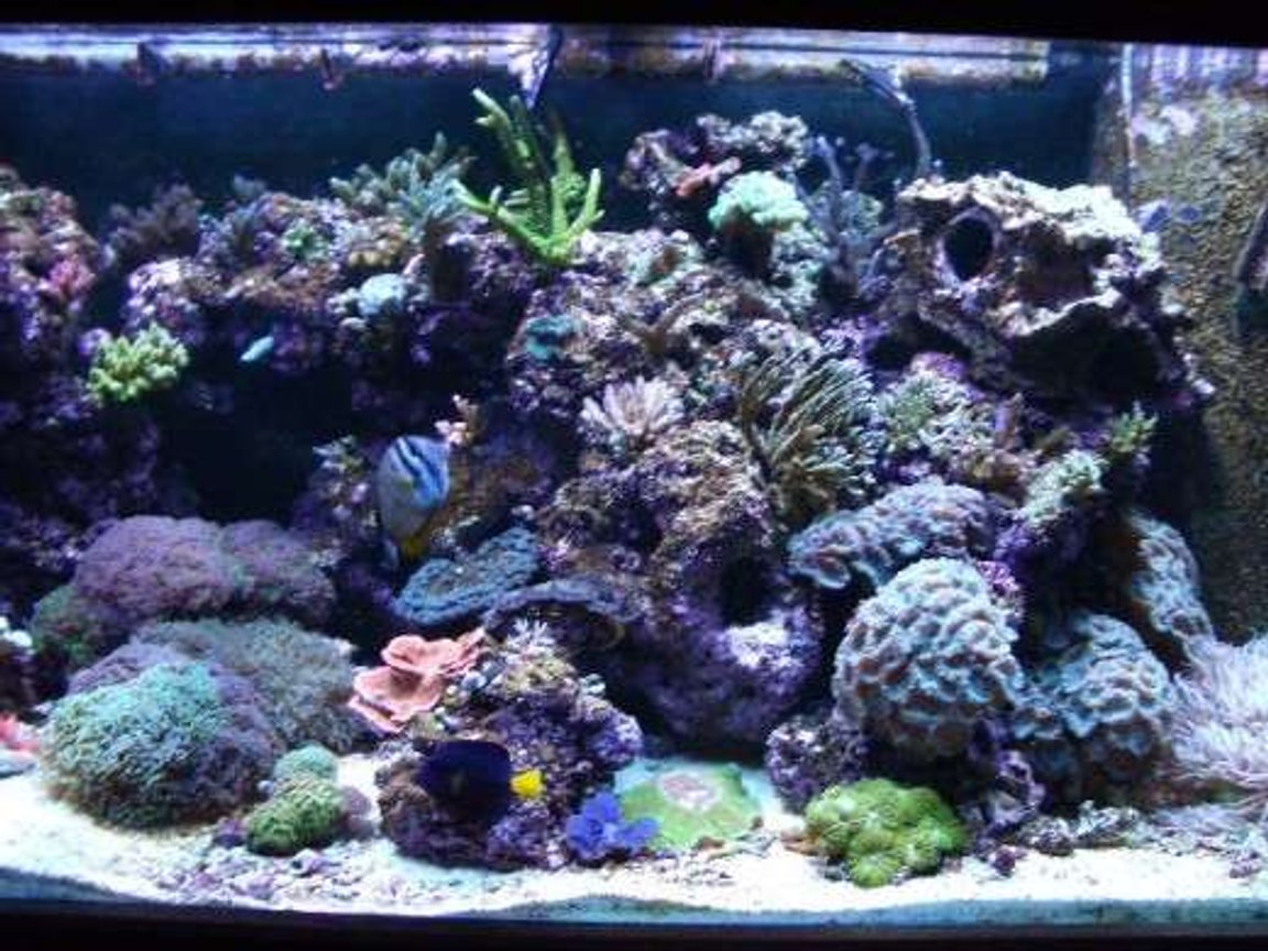 corals inverts stocking in 180 gallons tank - right side