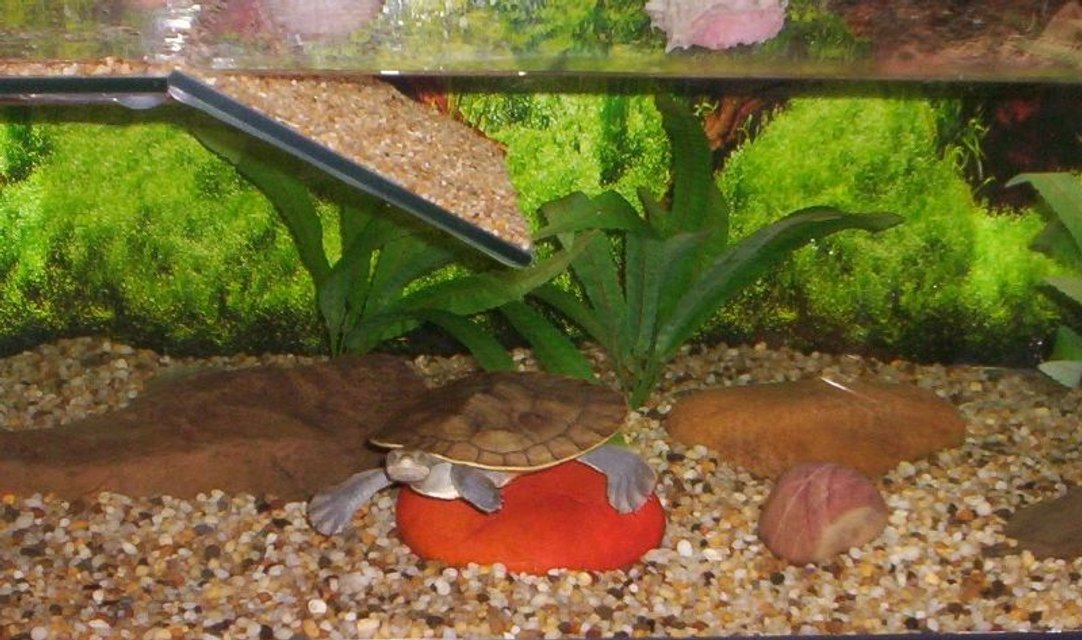 Rated #97: Corals Inverts Stocking In 24 Gallons Tank - My turtle, Lulu