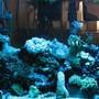 corals inverts stocking in 29 gallons tank - corals