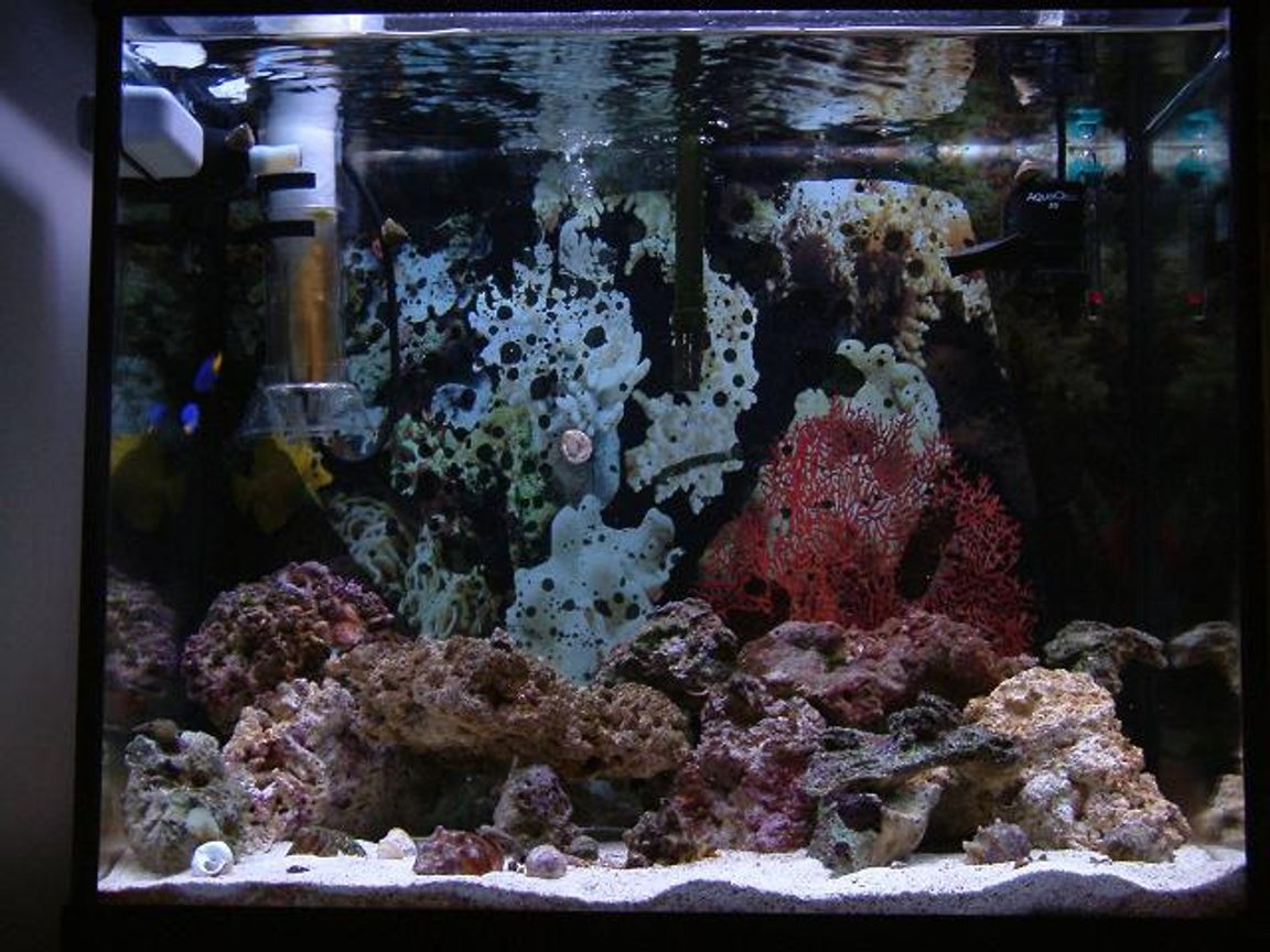 saltwater fish tank (mostly fish, little/no live coral) - A new hobbyist with questions