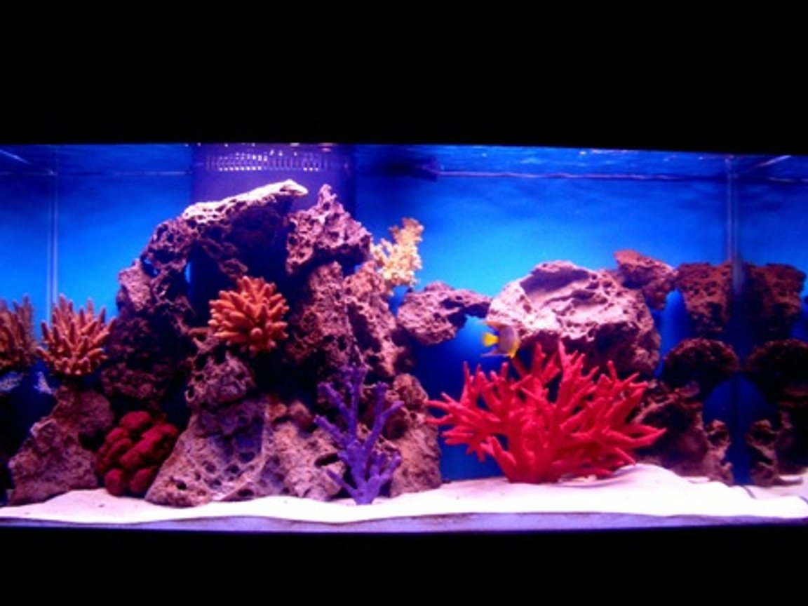90 gallons saltwater fish tank (mostly fish, little/no live coral) - My 90 gal