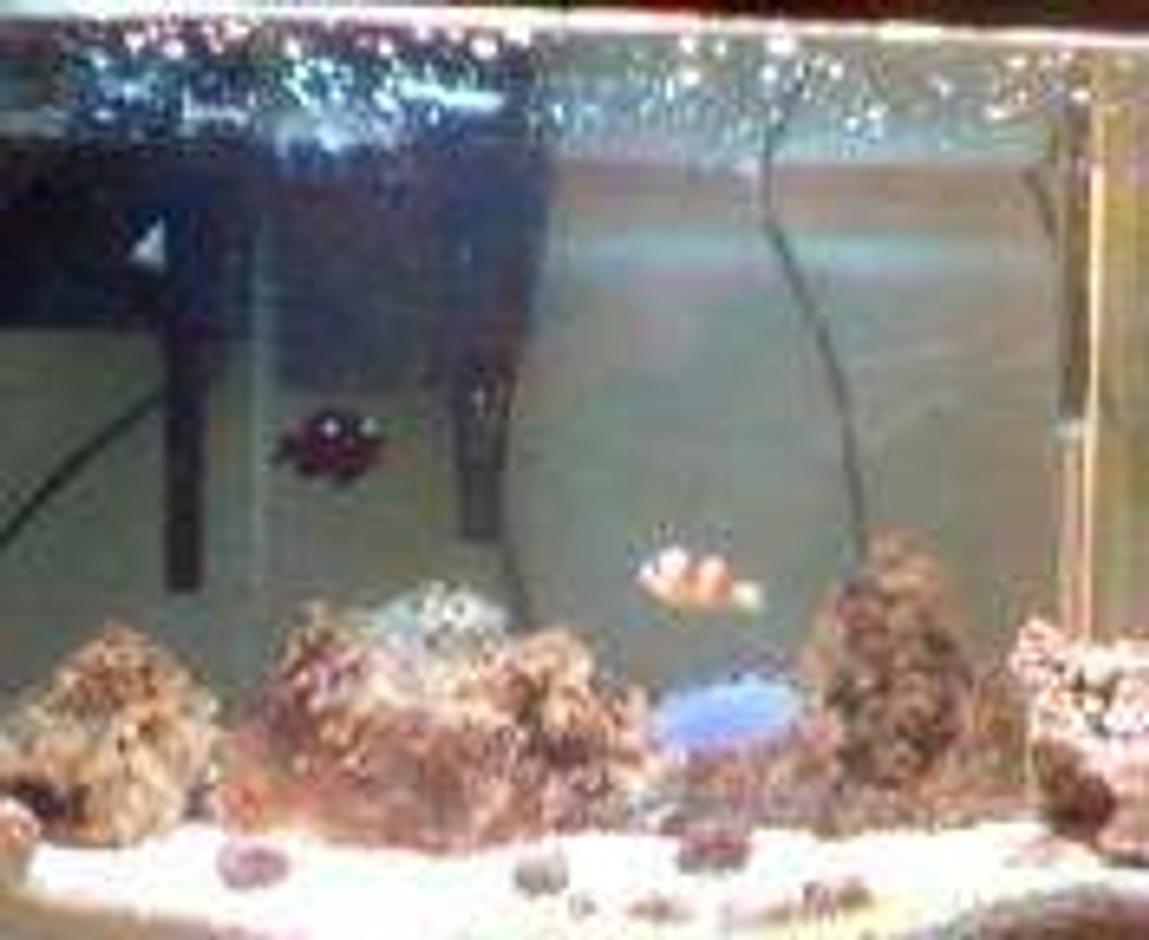 30 gallons saltwater fish tank (mostly fish, little/no live coral) - 30 gallon FOWLR & inverts