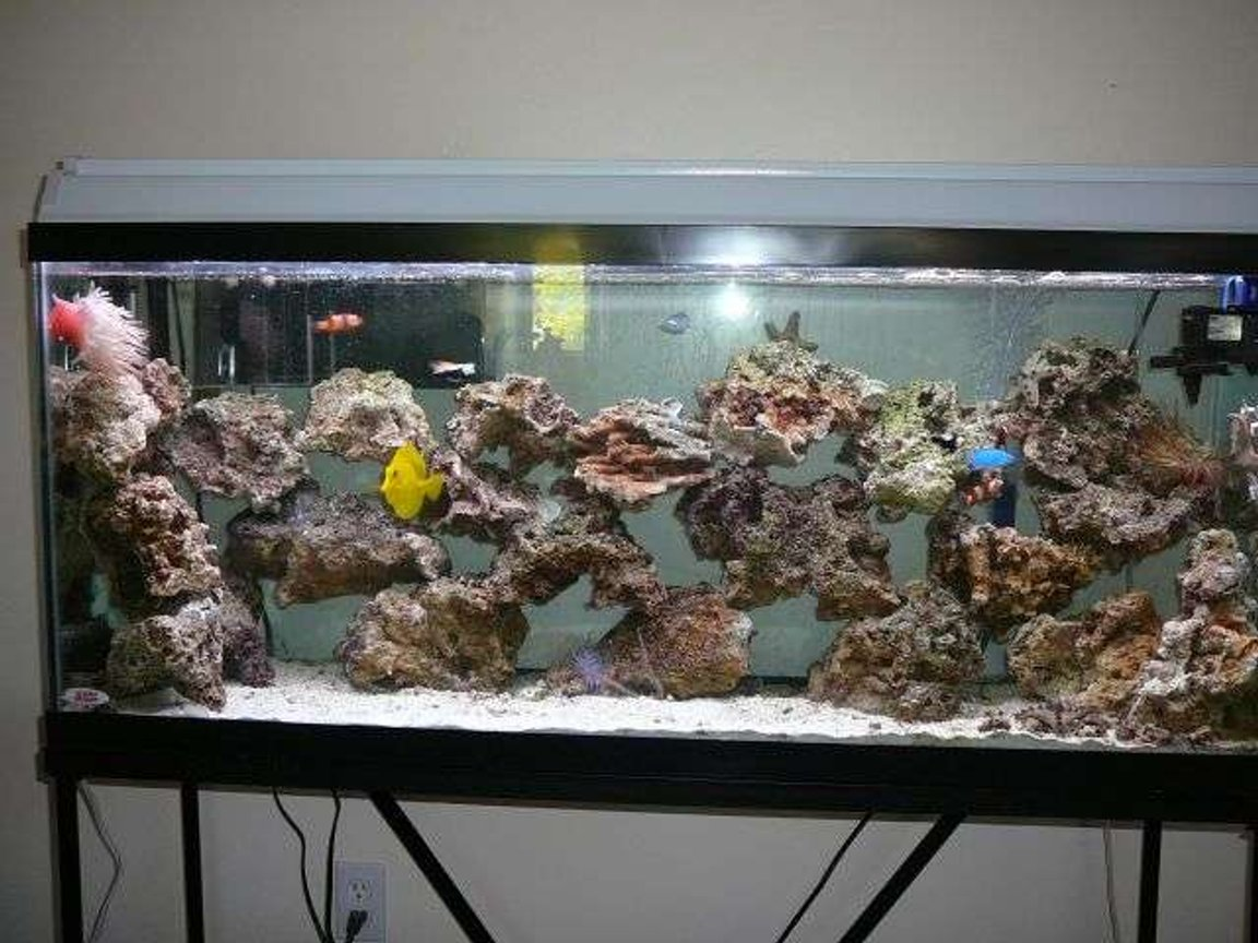 55 gallons saltwater fish tank (mostly fish, little/no live coral) - my 55 gallon tank salt tank