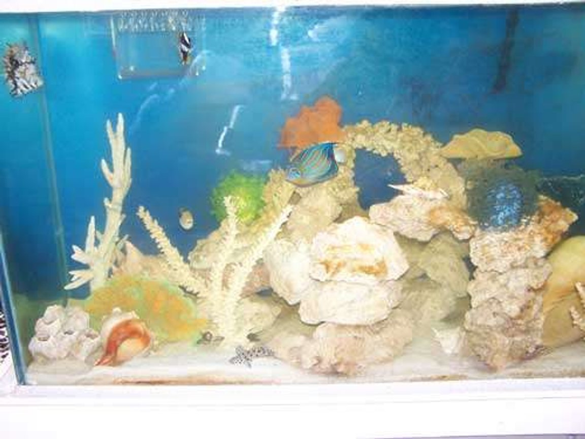 110 gallons saltwater fish tank (mostly fish, little/no live coral) - My tank.