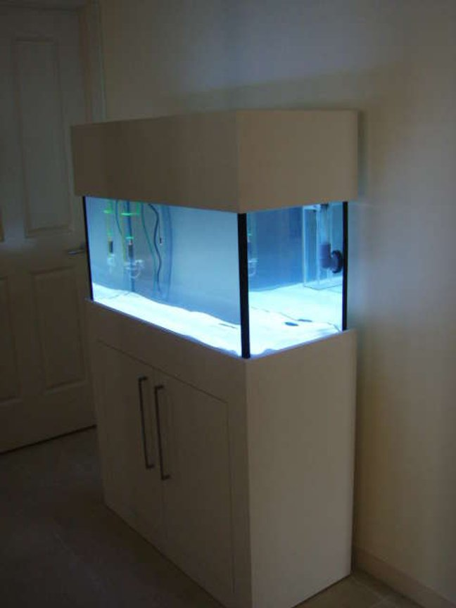 40 gallons saltwater fish tank (mostly fish, little/no live coral) - this is my 40g fish only tank still only 1 week old