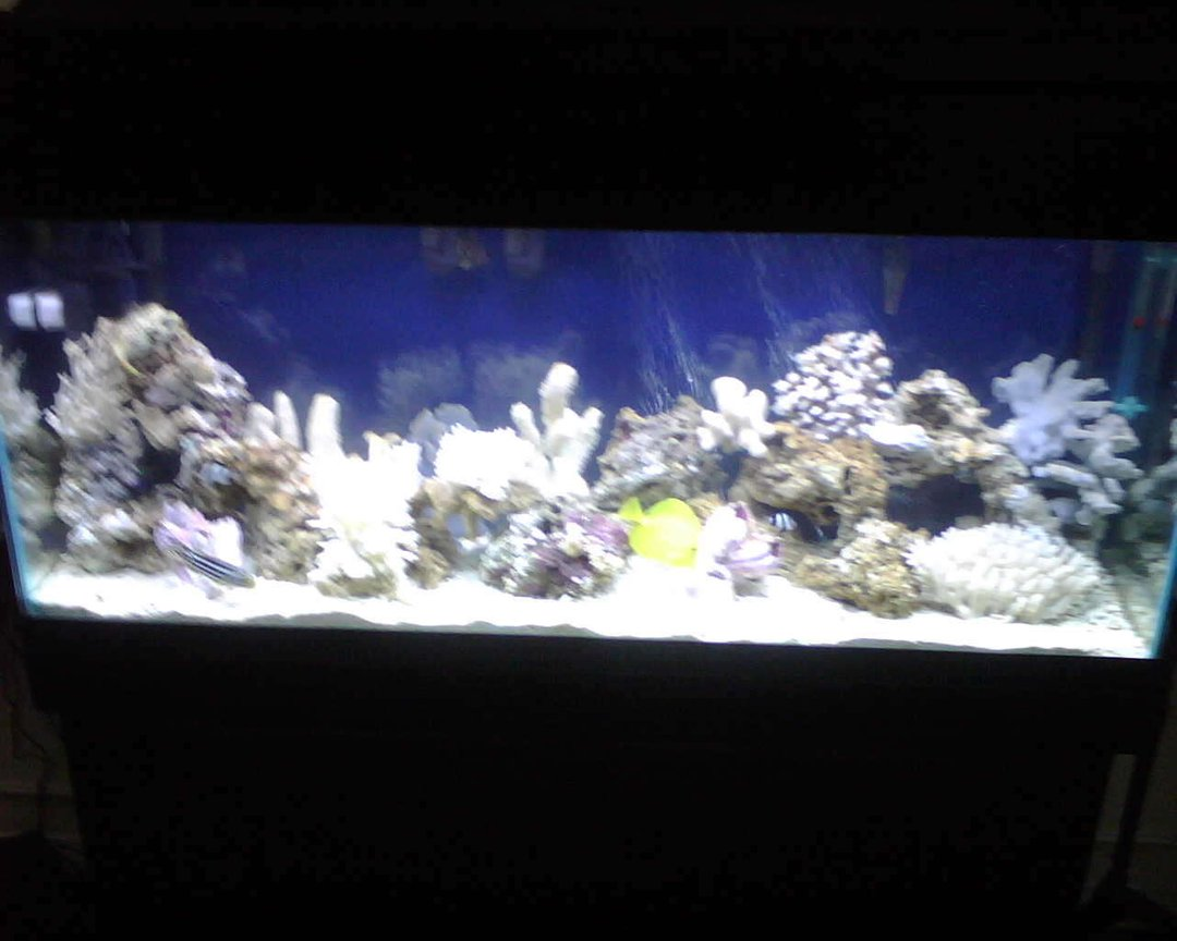 55 gallons saltwater fish tank (mostly fish, little/no live coral) - its worth it