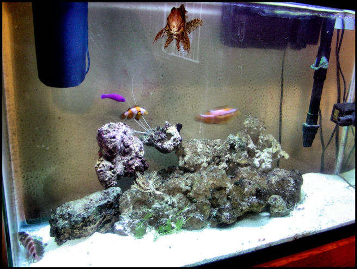 5 gallons saltwater fish tank (mostly fish, little/no live coral) - best pic of the tank with all the fish together....enjoy! more 2 come!