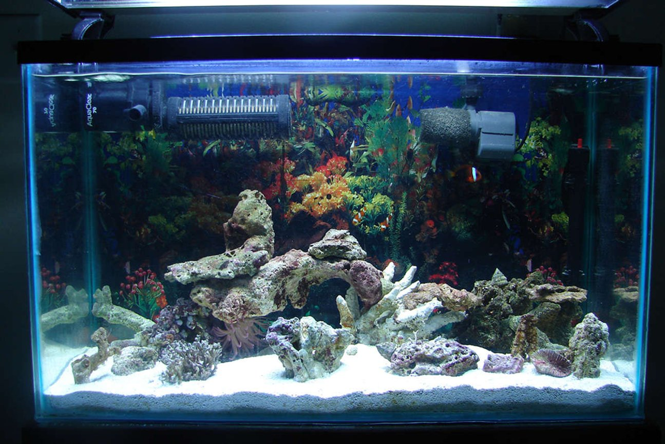 50 gallons saltwater fish tank (mostly fish, little/no live coral) - MY TANK