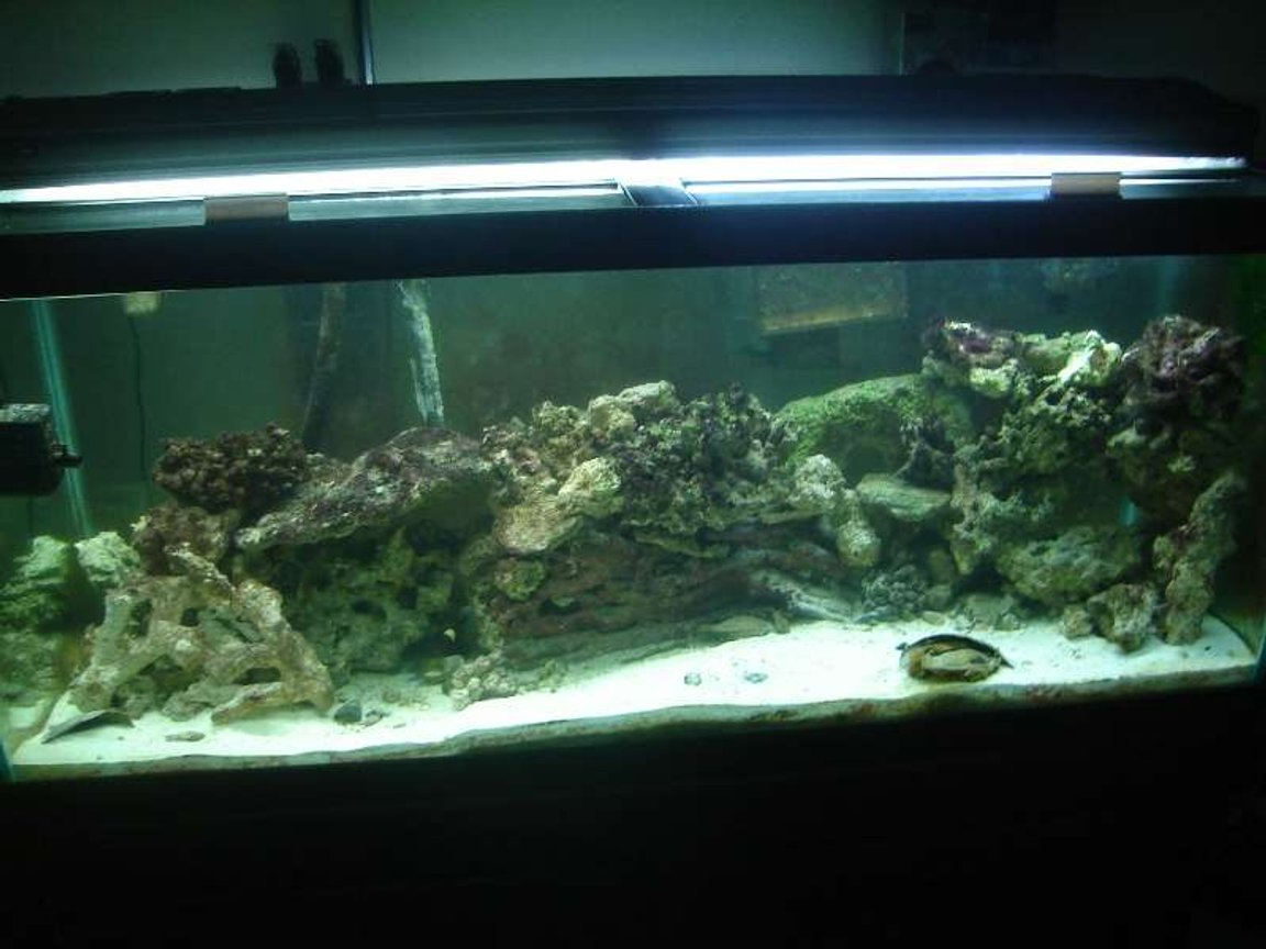 75 gallons saltwater fish tank (mostly fish, little/no live coral) - This is another picture of my 75 gallon tank.