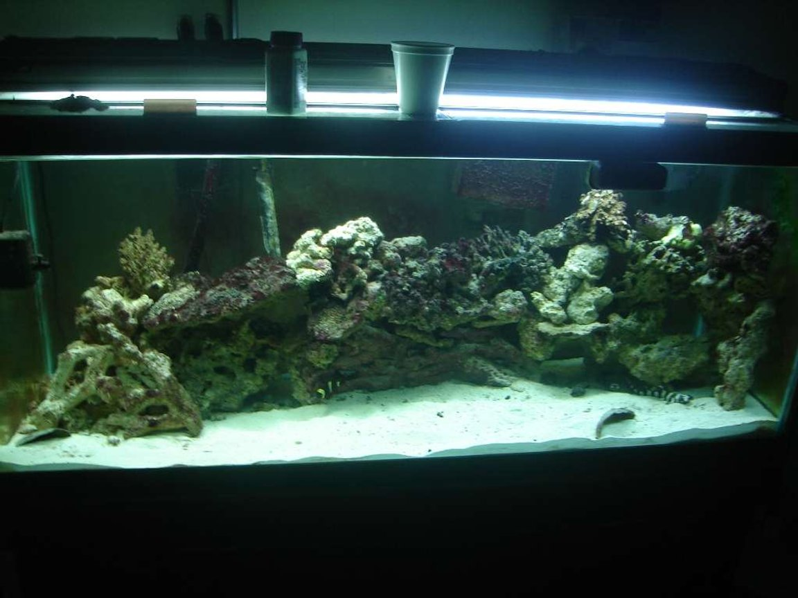 75 gallons saltwater fish tank (mostly fish, little/no live coral) - this is my fish tank after the sharks hatched