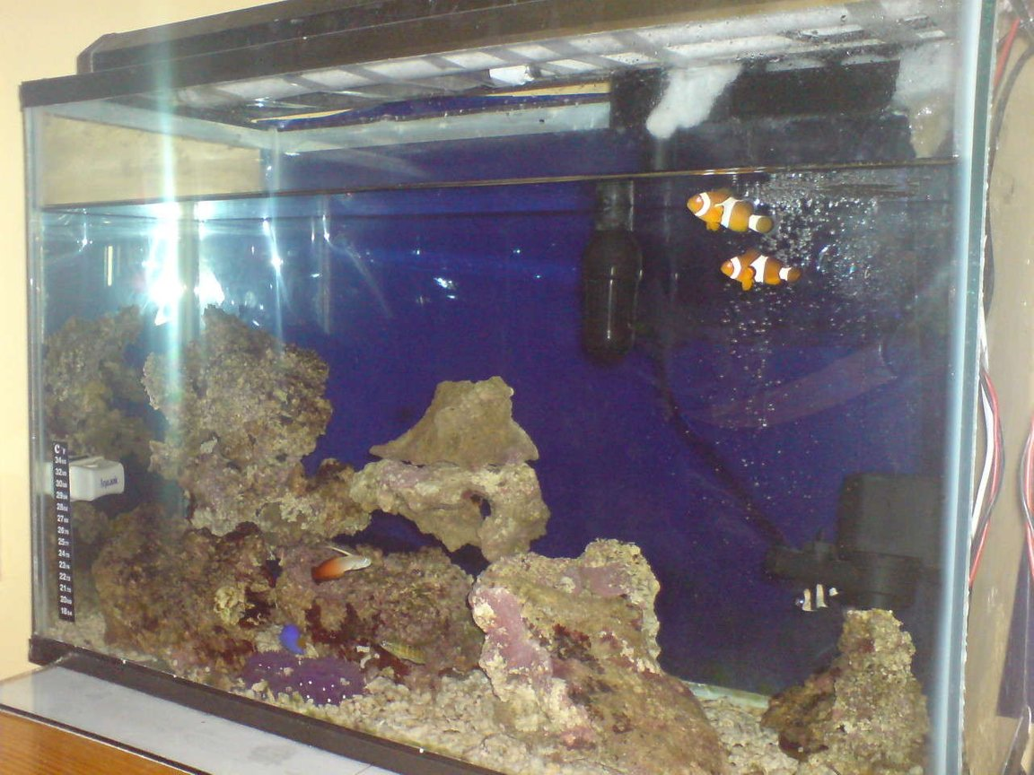 15 gallons saltwater fish tank (mostly fish, little/no live coral) - MY LOVELY TANK