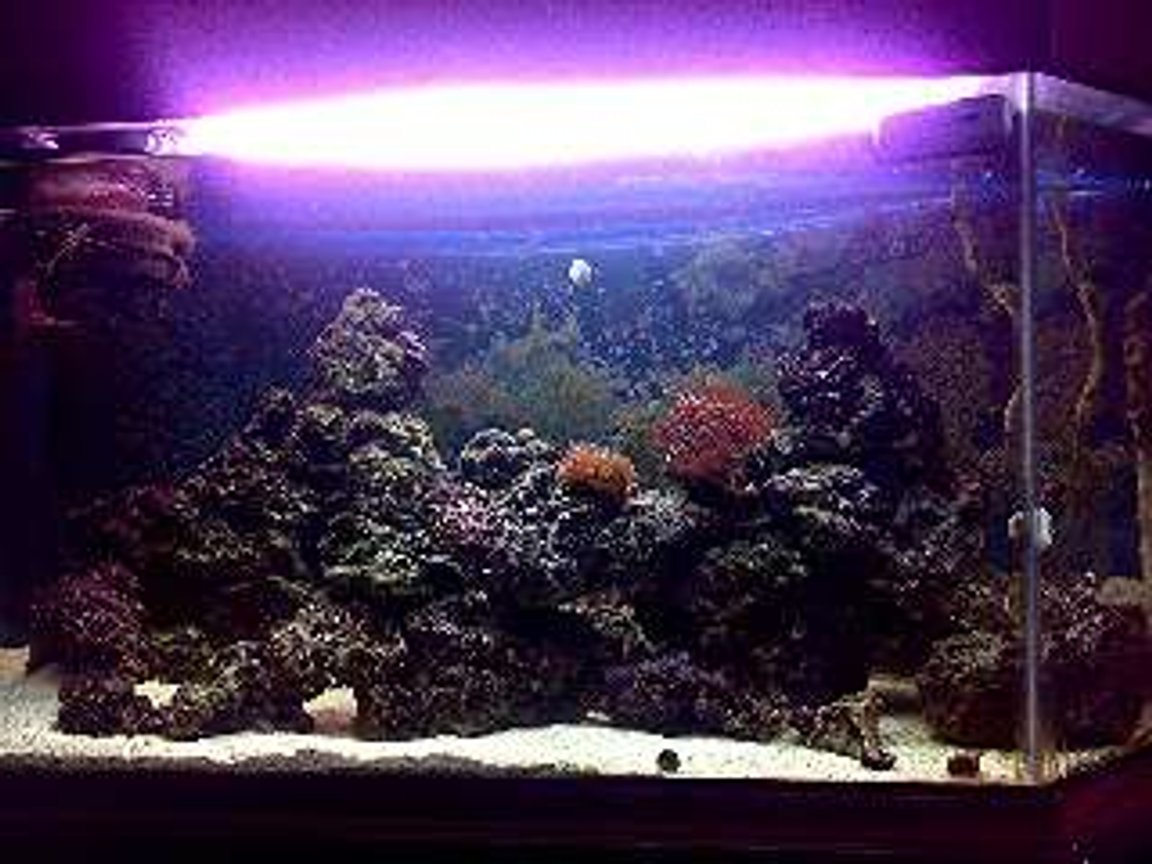 90 gallons saltwater fish tank (mostly fish, little/no live coral) - Front on night shot