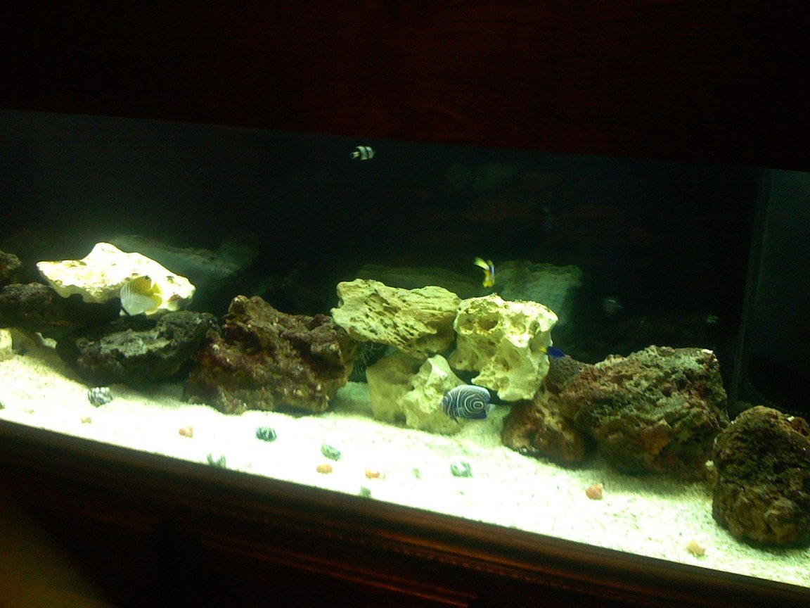 125 gallons saltwater fish tank (mostly fish, little/no live coral) - One happy family two