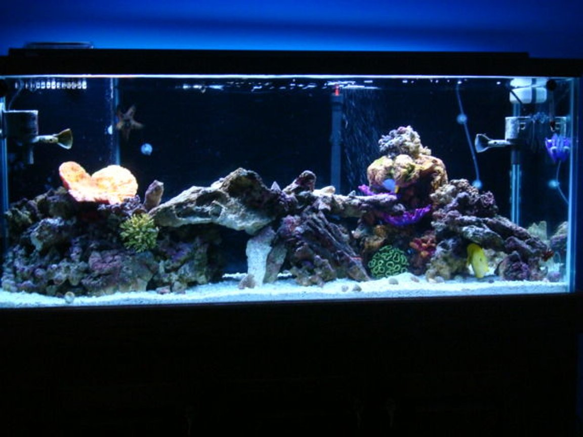75 gallons saltwater fish tank (mostly fish, little/no live coral) - 75 gallon saltwater