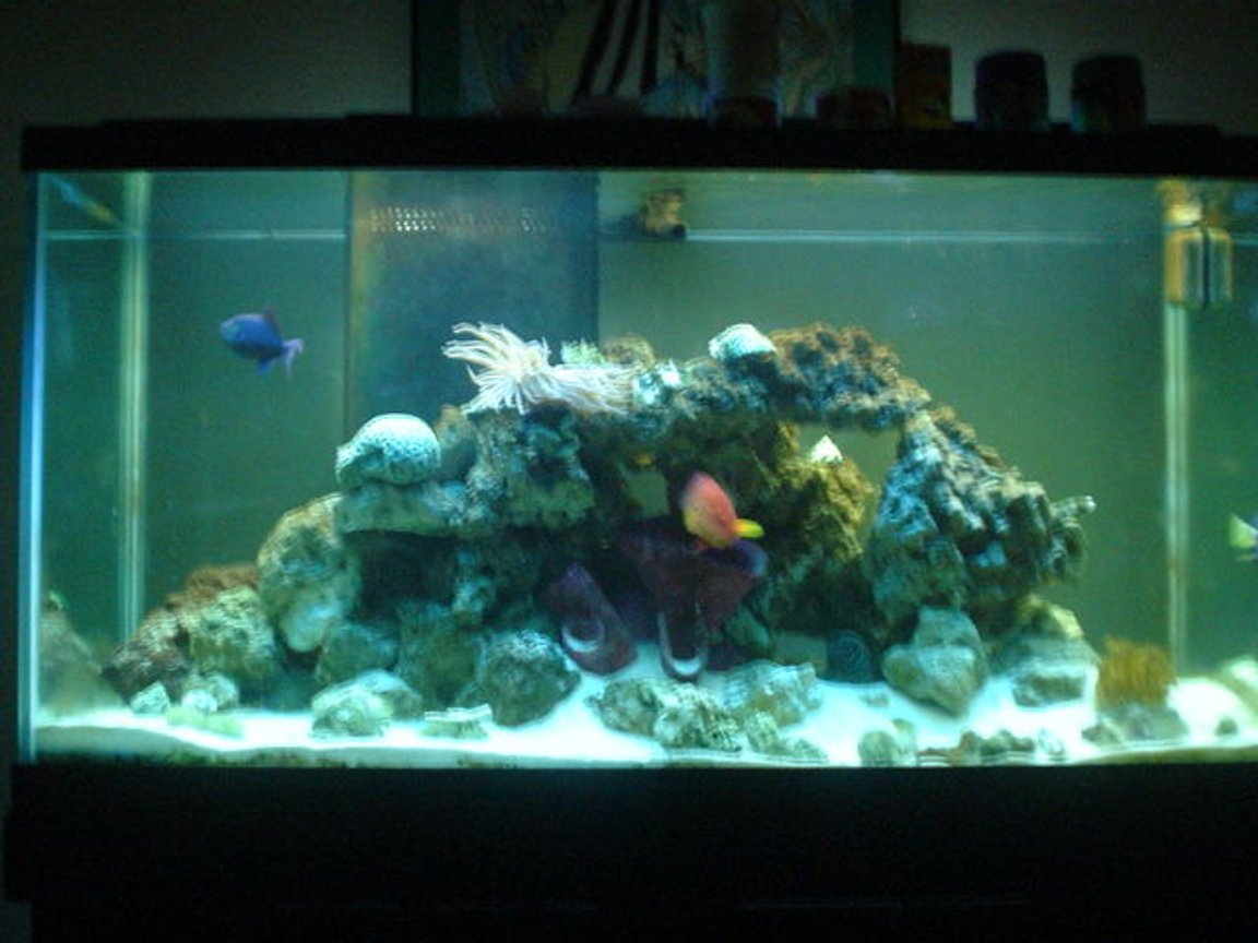 90 gallons saltwater fish tank (mostly fish, little/no live coral) - 90 gal FOWLR