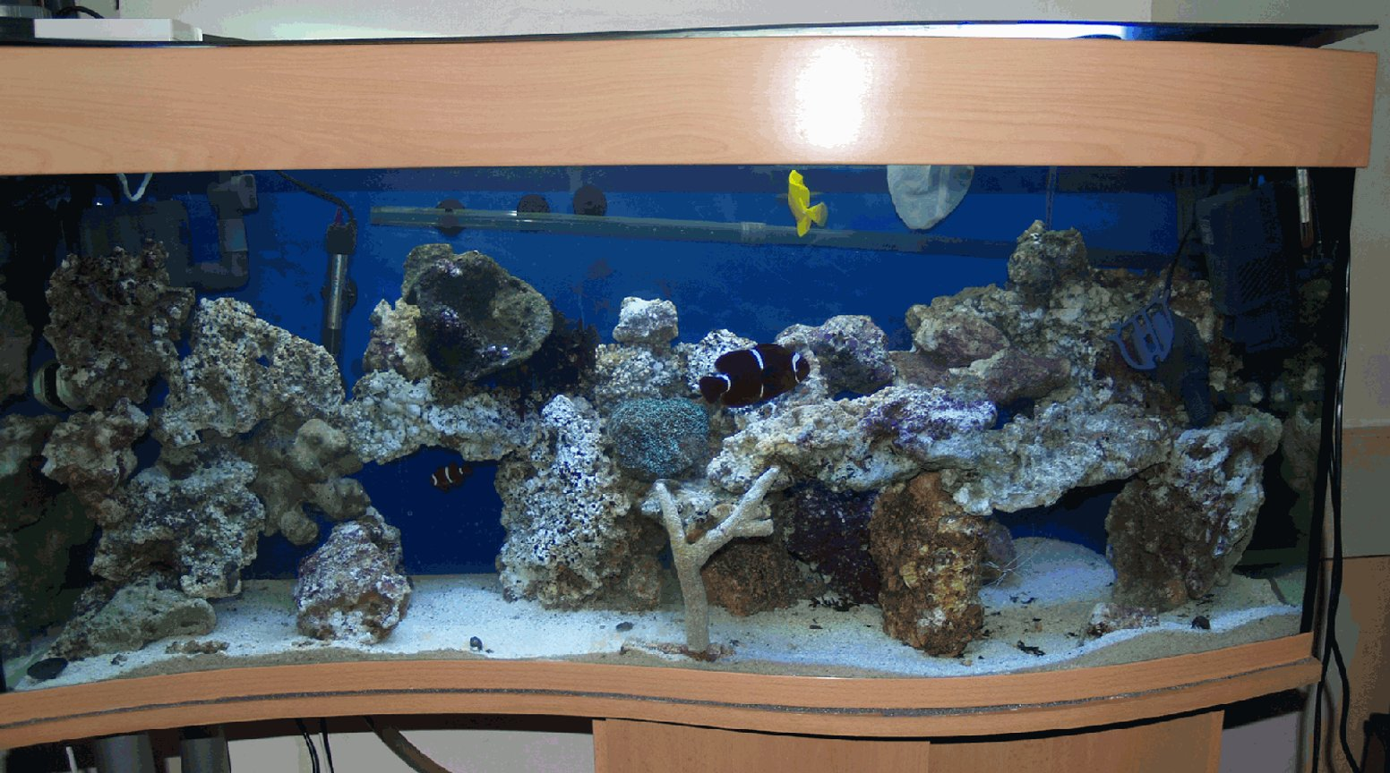 34 gallons saltwater fish tank (mostly fish, little/no live coral) - Full Tank View More to come