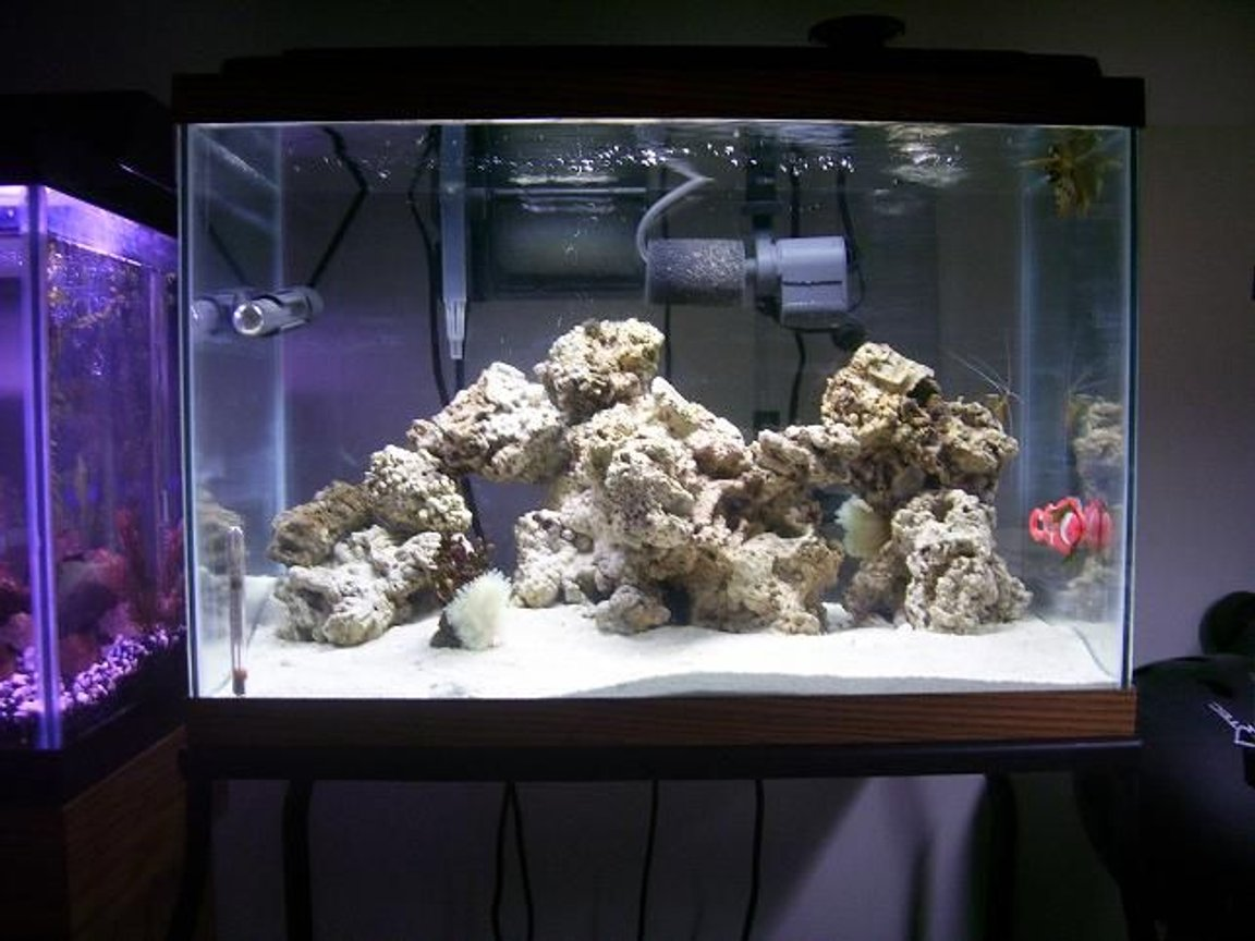 55 gallons saltwater fish tank (mostly fish, little/no live coral) - new saltwater tank added since pic powerhead and orbil lighting