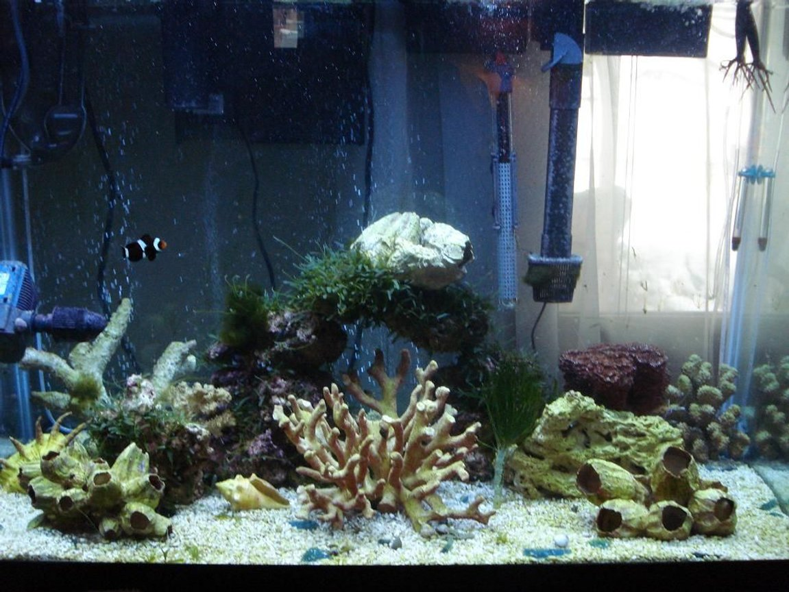 65 gallons saltwater fish tank (mostly fish, little/no live coral) - My FOWLR tank. It's been set up for two months, and contains only a lonely black clownfish and some crabs and shrimp at the moment. More fish will be coming. Comments are welcome!