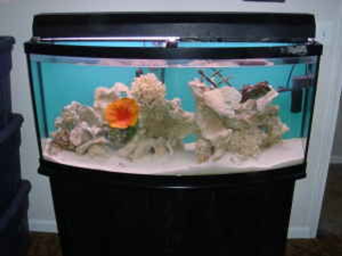 150 gallons saltwater fish tank (mostly fish, little/no live coral) - 72 gallon bow tank