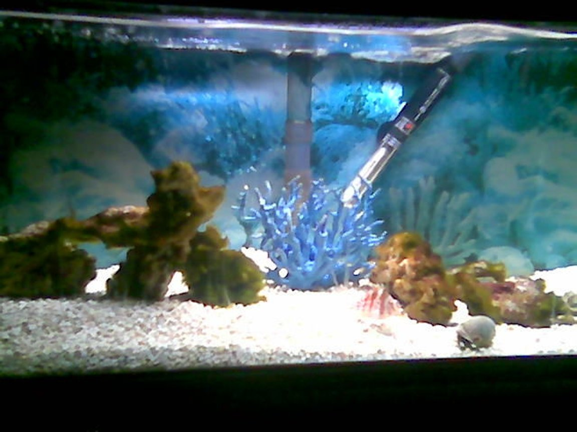 75 gallons saltwater fish tank (mostly fish, little/no live coral) - 20g salt