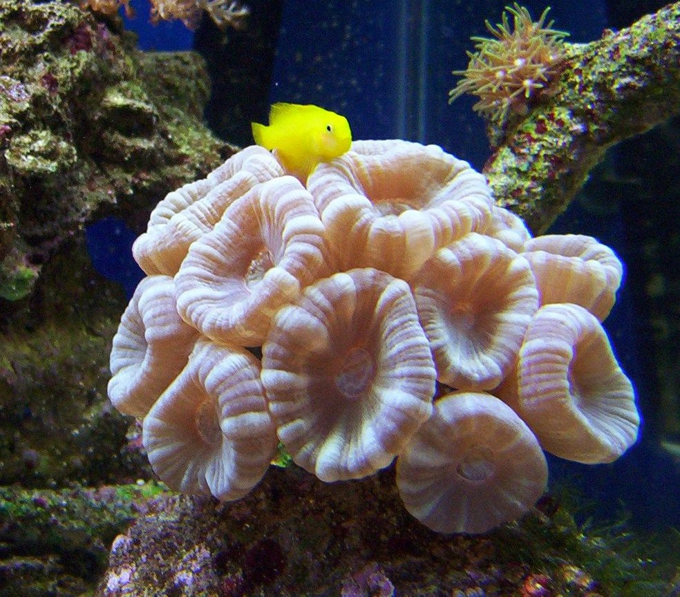 65 gallons saltwater fish tank (mostly fish, little/no live coral) - blue trumpet coral! goby likes his pic taken