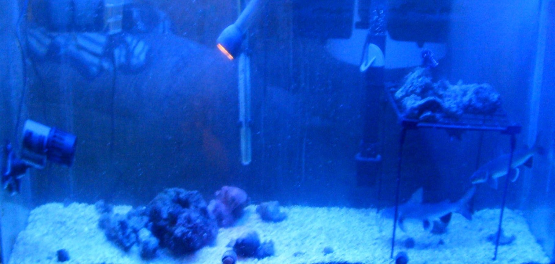 55 gallons saltwater fish tank (mostly fish, little/no live coral) - Deep Sea