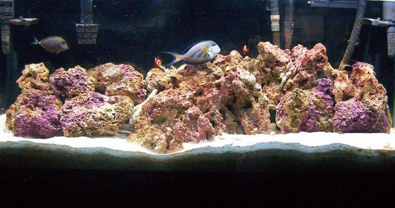 55 gallons saltwater fish tank (mostly fish, little/no live coral) - another pic of my tank