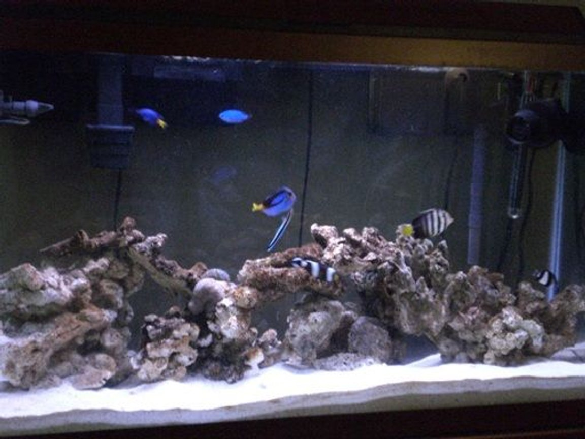 38 gallons saltwater fish tank (mostly fish, little/no live coral) - Saltwater Tank