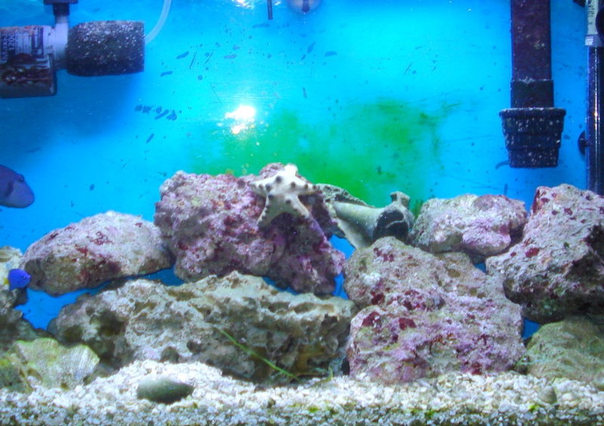 30 gallons saltwater fish tank (mostly fish, little/no live coral) - finally