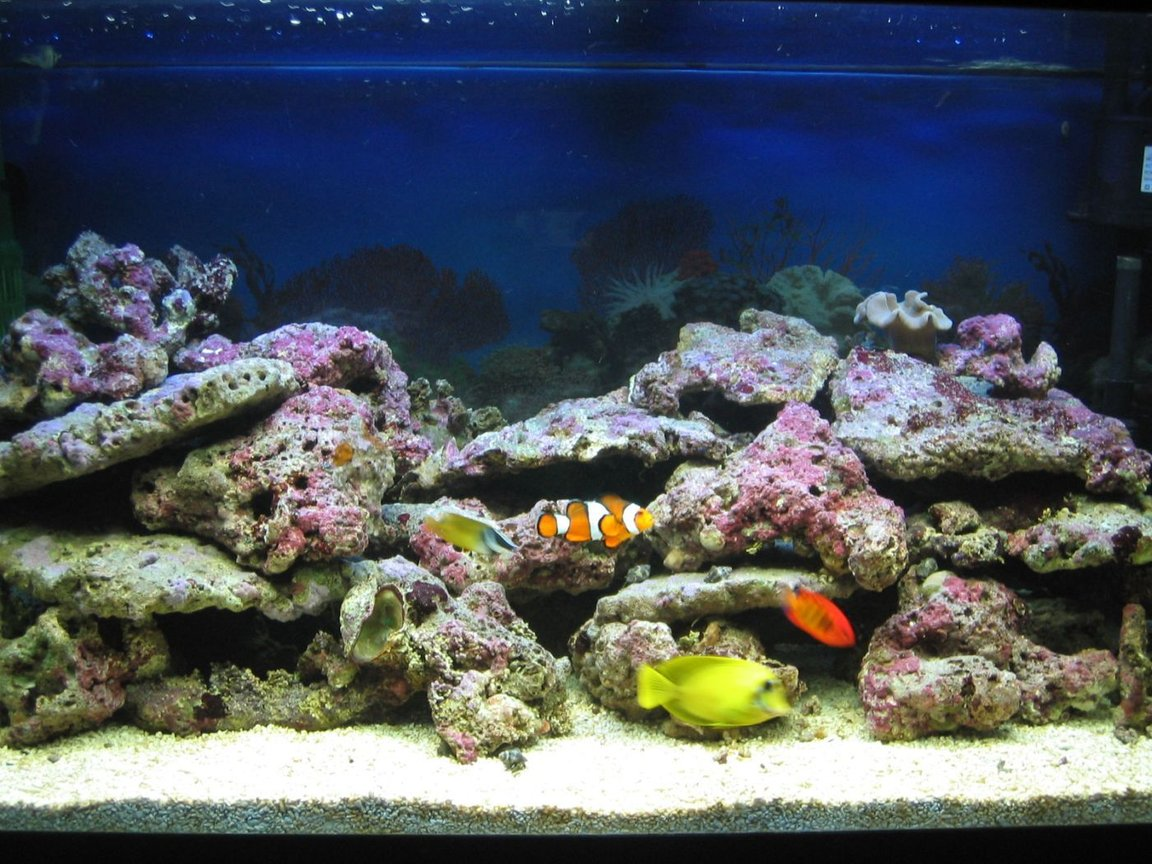75 gallons saltwater fish tank (mostly fish, little/no live coral) - Tank Full View