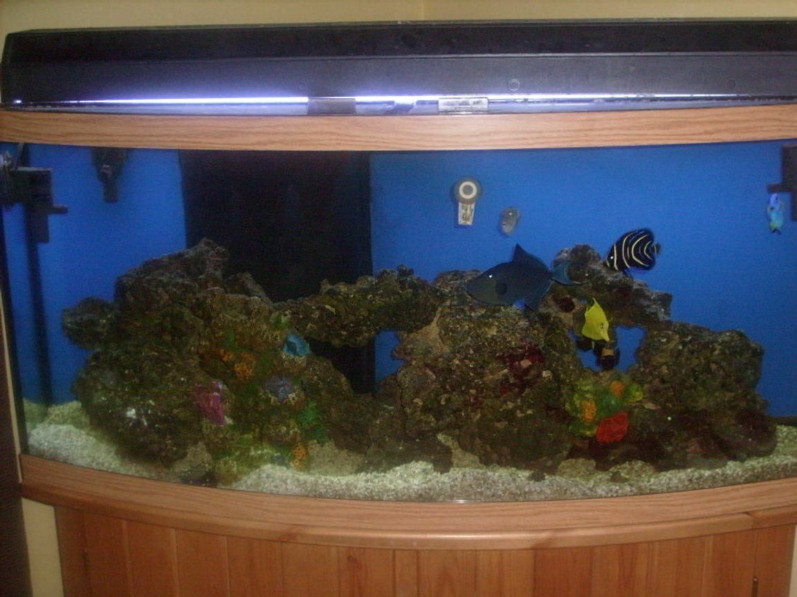 72 gallons saltwater fish tank (mostly fish, little/no live coral) - Tank 1