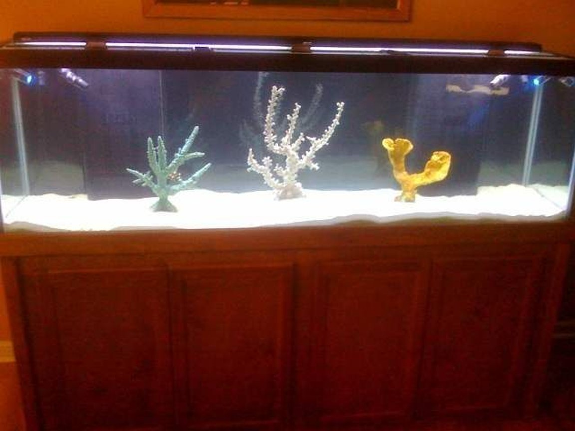 125 gallons saltwater fish tank (mostly fish, little/no live coral) - 125 gallon