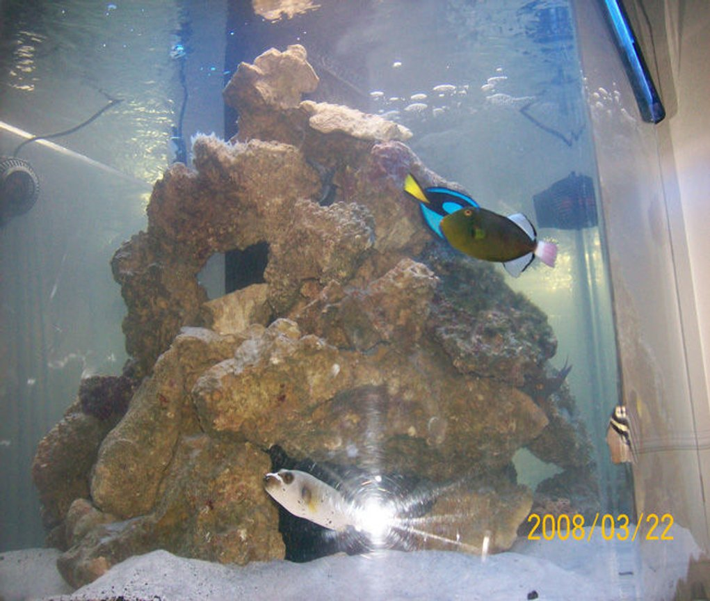 250 gallons saltwater fish tank (mostly fish, little/no live coral) - 250 hex