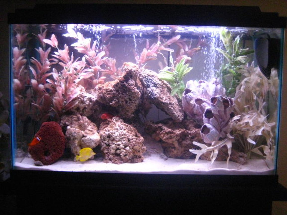 30 gallons saltwater fish tank (mostly fish, little/no live coral) - 30gl saltwater new look