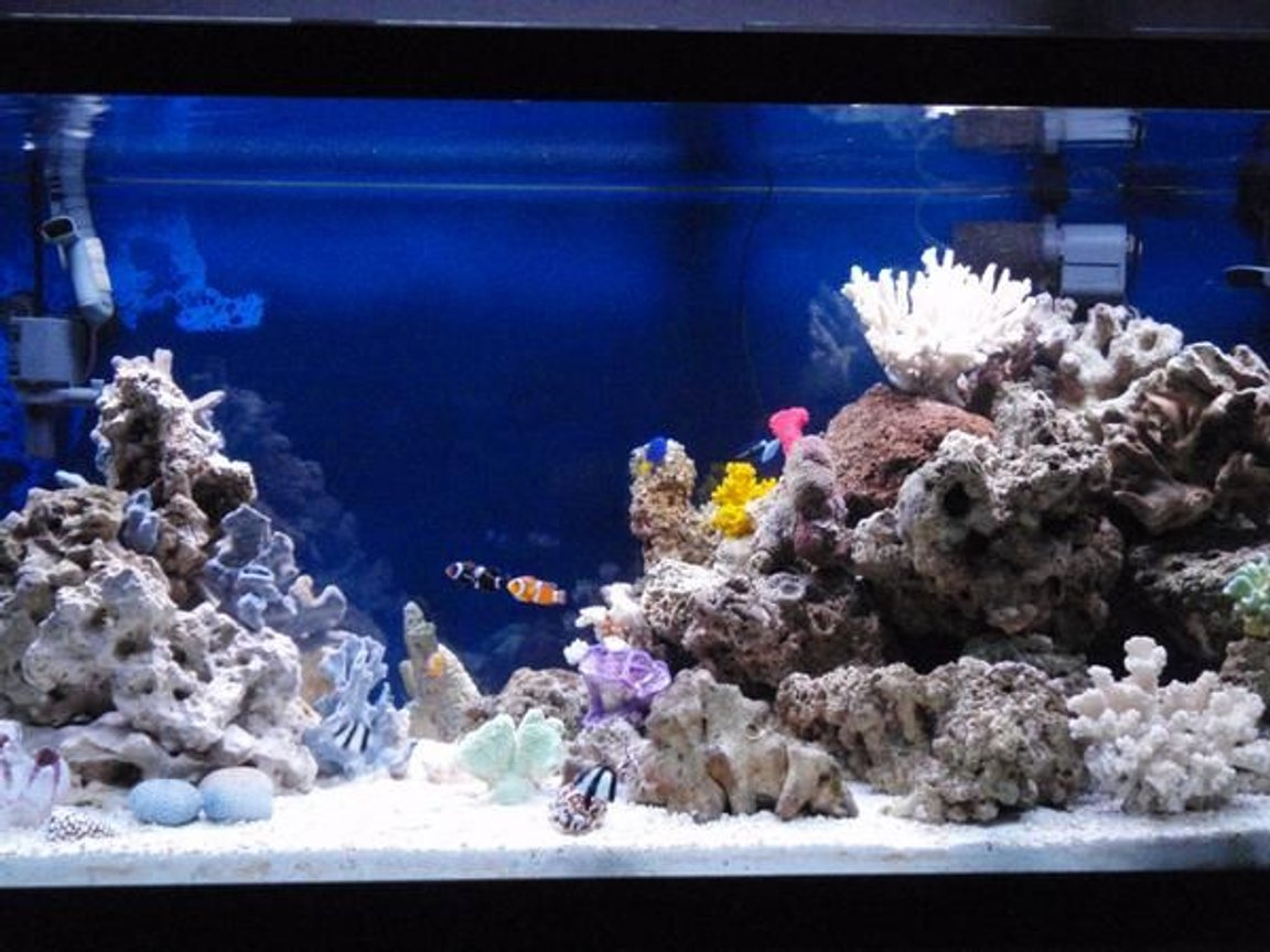 90 gallons saltwater fish tank (mostly fish, little/no live coral) - GOing on over 2 years, A better pic of my tank, any Ideas....