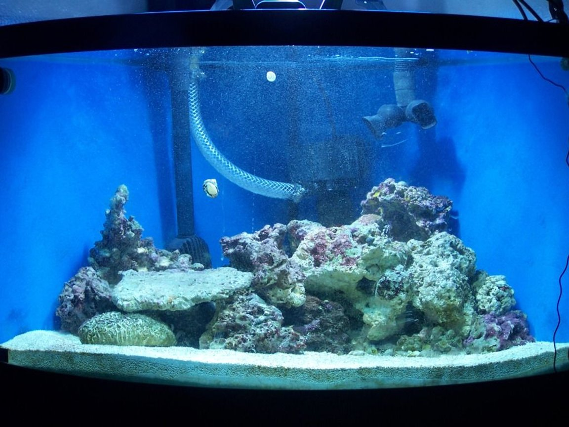 70 gallons saltwater fish tank (mostly fish, little/no live coral) - 70 gal bowfront, fx5, 380 watt metal halide / pc combo, remora with mag drive 3, approx 40 lbs live rock and 80 lbs lvie sand, astrea, nassarious and turbo snails with scarlet and blue leg hermits. Coral beauty angel and black and white oscellaris