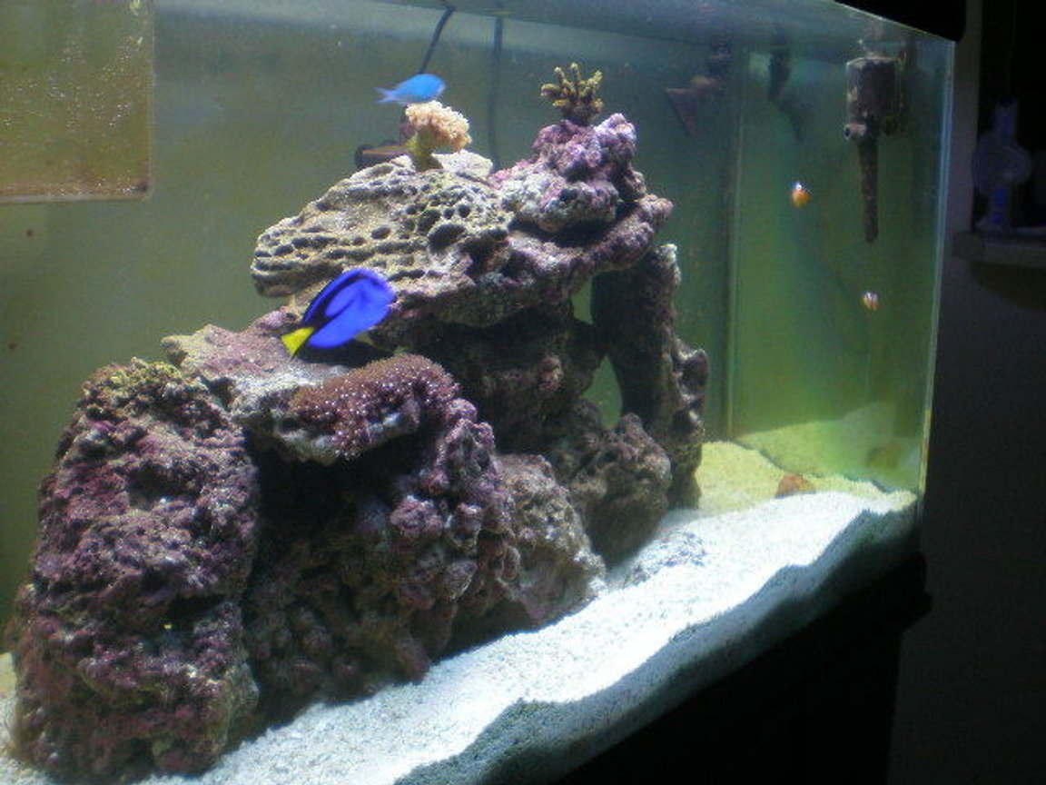 55 gallons saltwater fish tank (mostly fish, little/no live coral) - After new PC's Lot of algae growth.