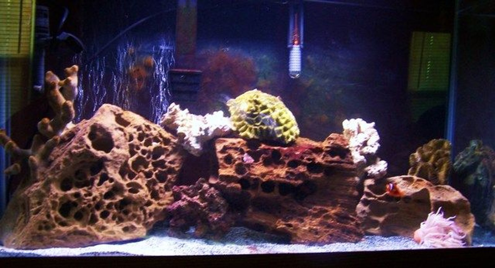 55 gallons saltwater fish tank (mostly fish, little/no live coral) - my 2 month tank (55 gallon) slowly building up!!