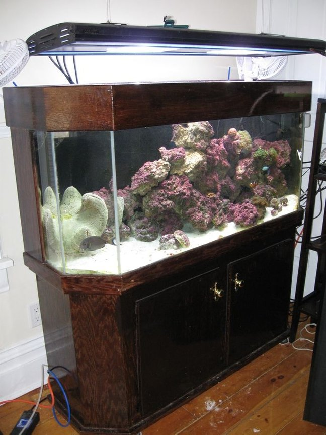 "75 gallons saltwater fish tank (mostly fish, little/no live coral) - Hand rebuilt and stained Dutch Aquarium Systems, drilled for 2X1.5"" drains, 30 Gallon sump refugium combo. Aqualight Pro lights, Ocean Runner 6500 Pump (10-15X), Corner Koralias, ASM G2 Skimmer,Aquacontoller 3"