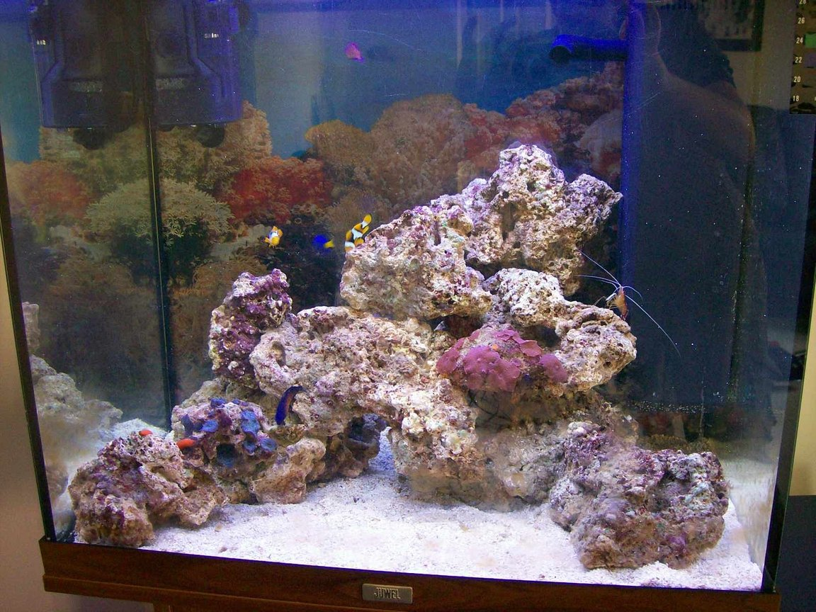 30 gallons saltwater fish tank (mostly fish, little/no live coral) - My tank