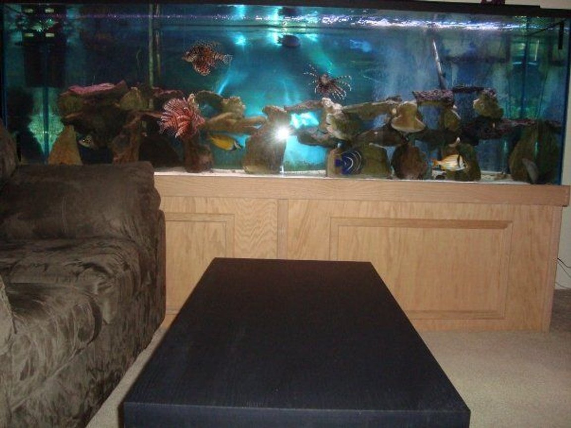 310 gallons saltwater fish tank (mostly fish, little/no live coral) - 310 Gallons. The dimensions are 96in x 32in x 24in. Individual Pictures of the fish coming soon.