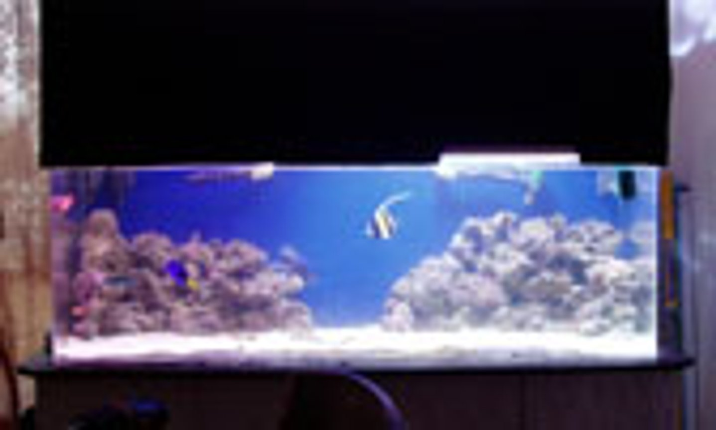 100 gallons saltwater fish tank (mostly fish, little/no live coral) - 120 gal..with LR and moorish idol, regal tang,. snowflake eel, lionfish, puffer, lunare wrasse, i have a 450w mh, 175w mh and 370w of vho,,