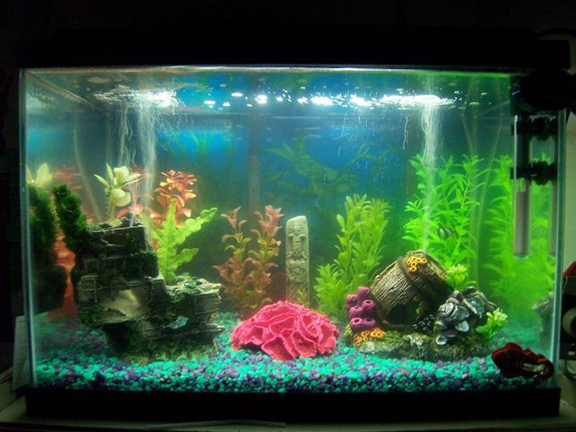 55 gallons saltwater fish tank (mostly fish, little/no live coral) - My 20 Gallon Saltwater...!