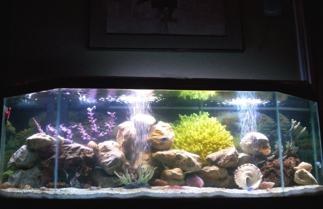 55 gallons saltwater fish tank (mostly fish, little/no live coral) - 1st attempt at saltwater: 55 gallon fish only, 1 month old