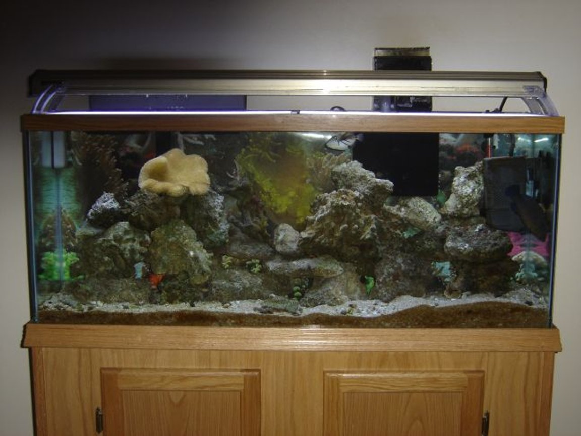 55 gallons saltwater fish tank (mostly fish, little/no live coral) - 55 gal fish onlee