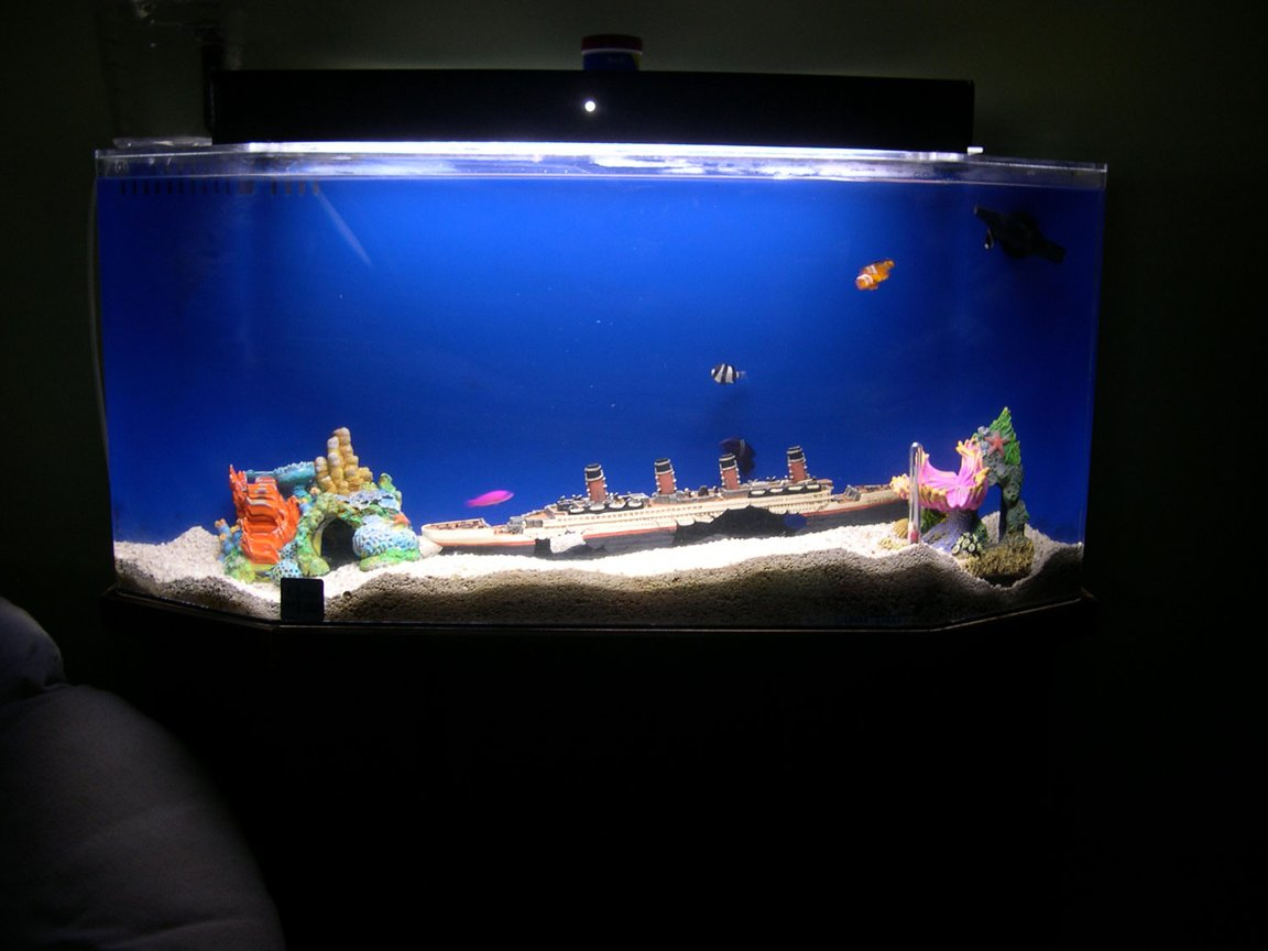 29 gallons saltwater fish tank (mostly fish, little/no live coral) - Starter tank