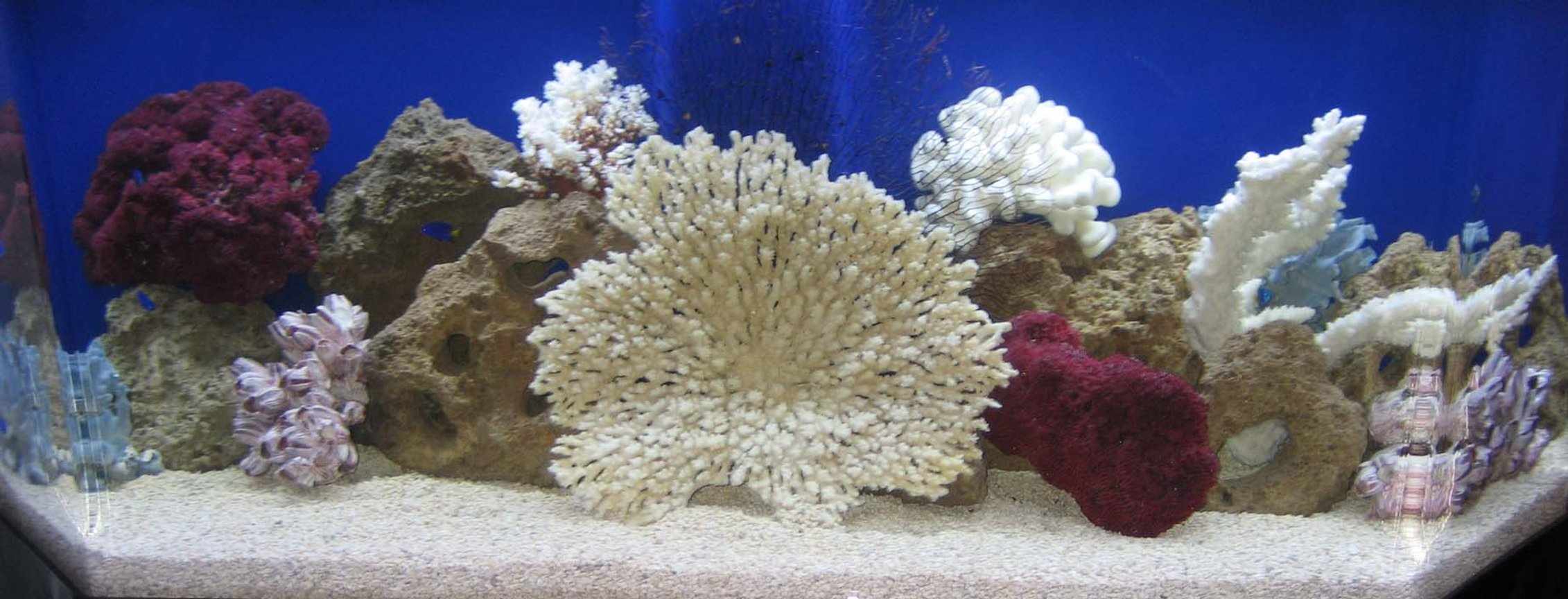 100 gallons saltwater fish tank (mostly fish, little/no live coral) - My Tank