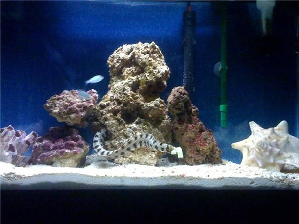 29 gallons saltwater fish tank (mostly fish, little/no live coral) - Snowflake eel house