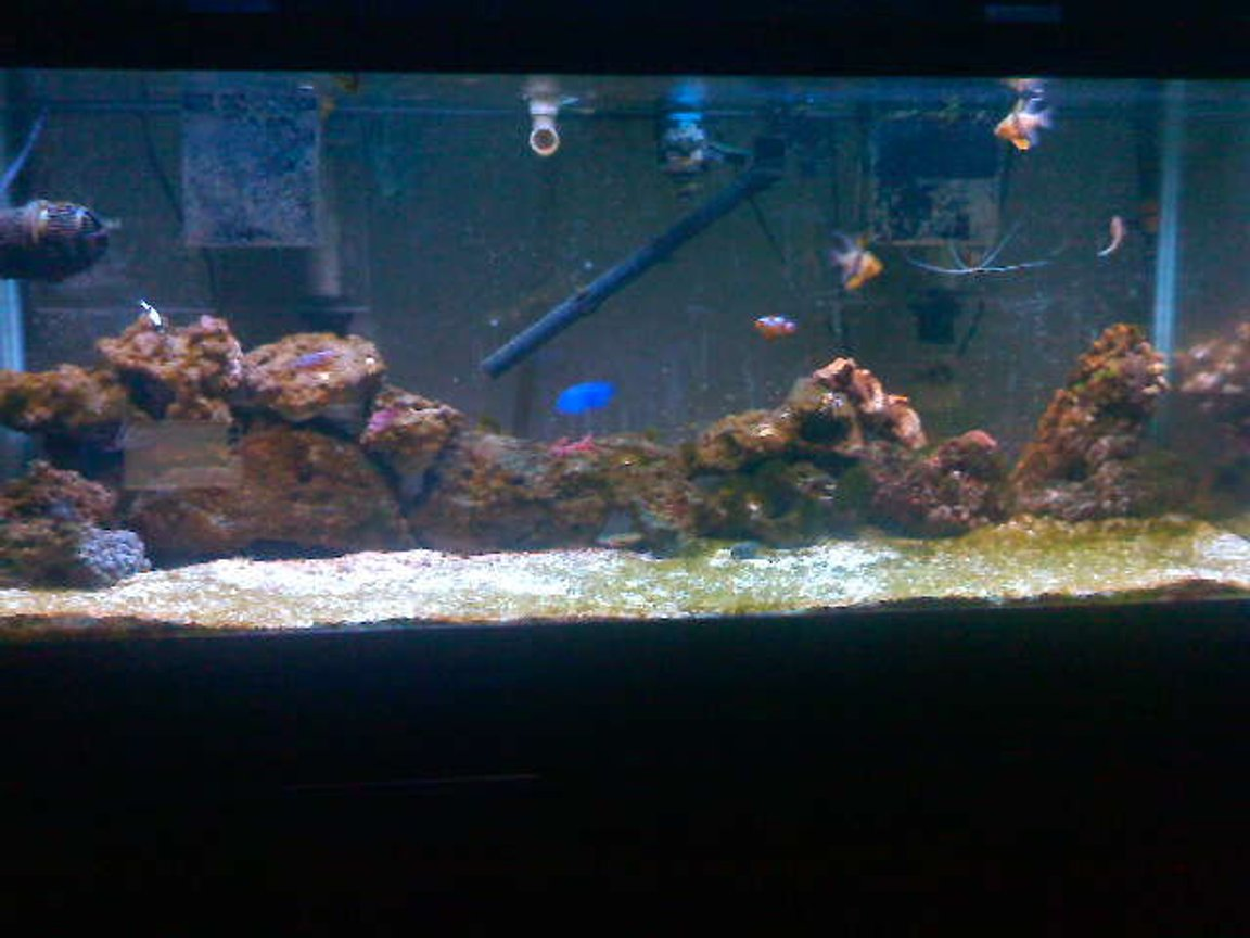 75 gallons saltwater fish tank (mostly fish, little/no live coral) - The Making